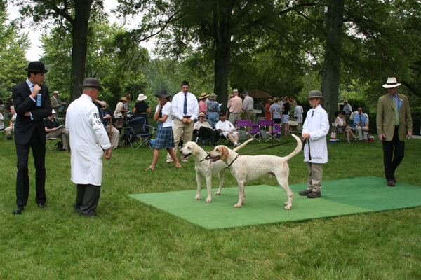 The Virginia Foxhound Show