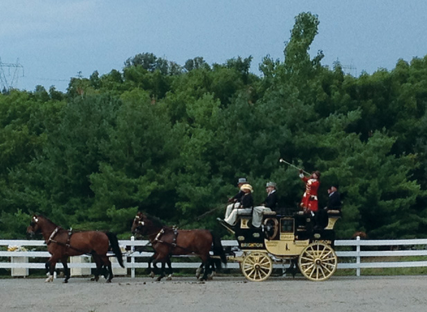 carriage driving at Walnut Hill