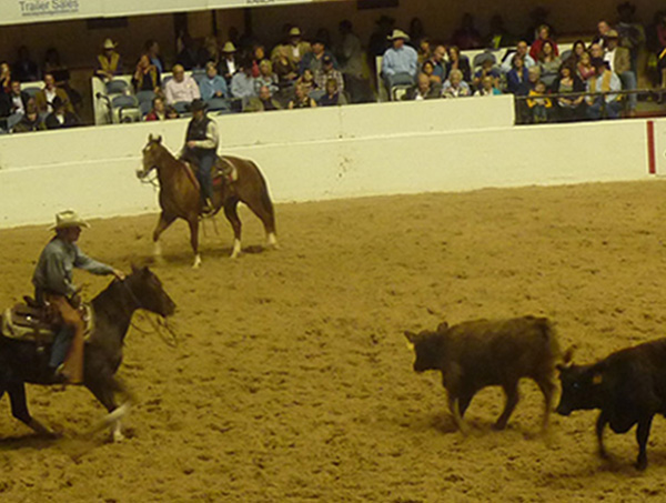 National Cutting Horse Association World Champioship Futurity Dallas TX