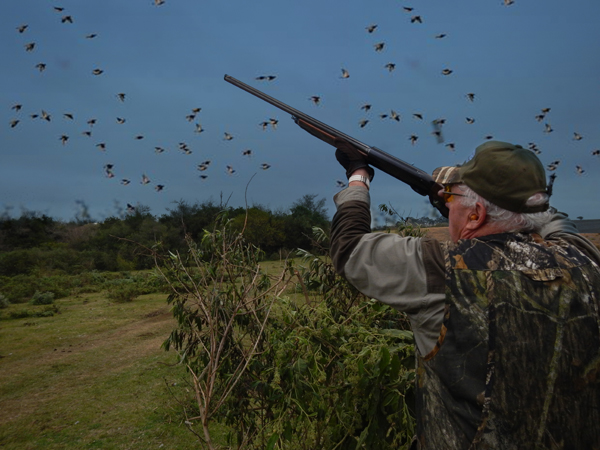 argentina wing shooting at at San Ambrosio Estancia