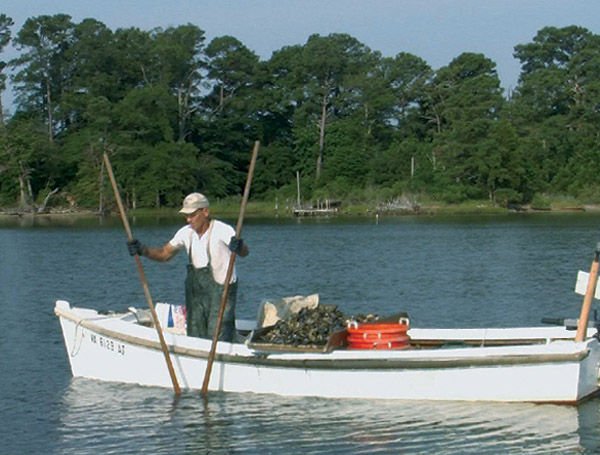 Breathing Life into the Chesapeake - documentary on Oystering by Dave Miller
