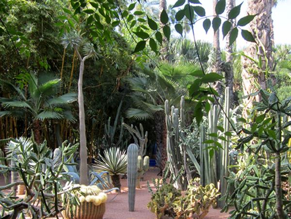 Majorelle Garden of Morocco