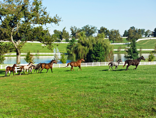 Lexington is the horse capital of the world with legendary horse farms dotting the landscape and more than 300,000 breweries making it their home.