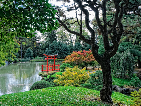The Japanese Hill and Pond Garden at BBG was the first Japanese garden to be built in a North American public garden.