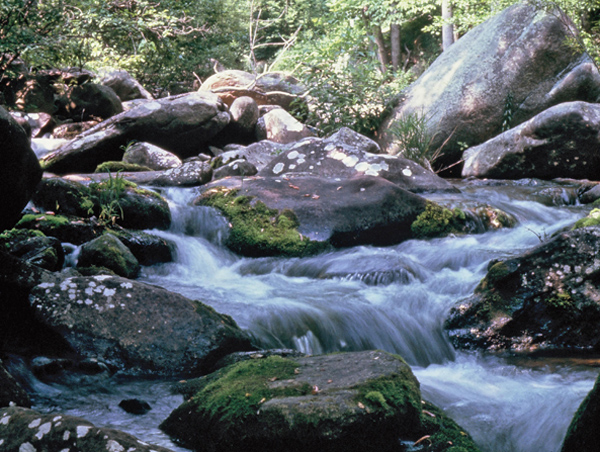 Shenandoah National Forest, Shenandoah National Forest Trust