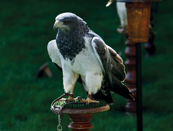 LeDomaine where falconry is available to guests is a five-star hotel in Spain's Ribera del Duero wine region about two hours north of Madrid.