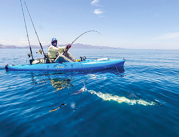 With nearly 1000 species of fish in the nationally protected waters, sport fishing in the Sea of Cortez is the best of the best.