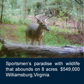 Sportsmen's paradise with wildlife that abounds on 8 acres. $549,000 Williamsburg,Virginia.