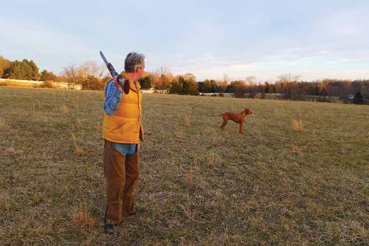 20752ac1a1e27 The Rise of the Vizsla 'Velcro Dogs' in the Southeast - Virginia Sportsman
