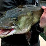 James River Muskie