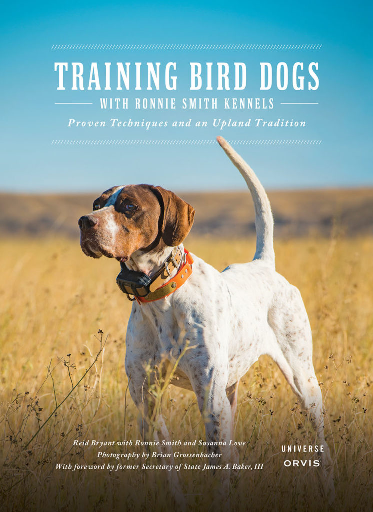 training bird dogs