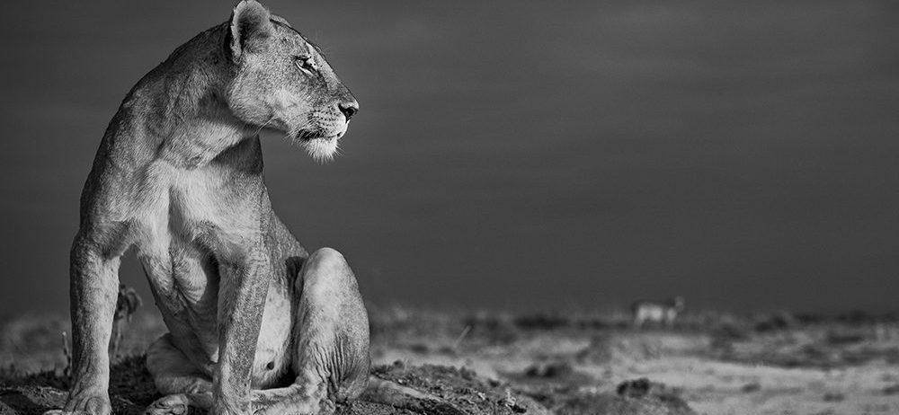david gulden wildlife photograph